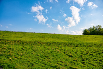 Meadow with sunshine
