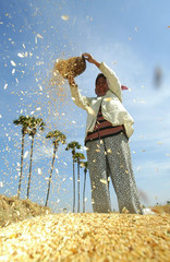 Cambodian farmer works in a rice field in Kampong Speu province west of Phnom Penh