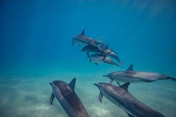 Wild dolphins underwater in deep blue ocean