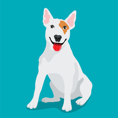 Cute dog Bullterrier breed