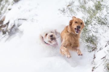 Spielende Hunde im Schnee