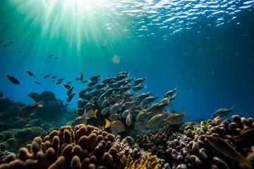 Underwater world with fish on background