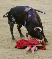 """Matador Jose Miguel Perez """"Joselillo"""" is trampled by a Dolores Aguirre ranch fighting bull during a bullfight at the Plaza de Toros in Pamplona."""