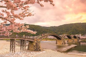 Cherry blossom Full Bloom at Kintaikyo Bridge
