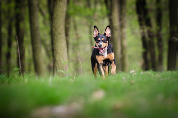 Beautiful dog portrait in the middle of the forrest in spring time