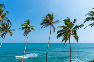 Palms over the ocean