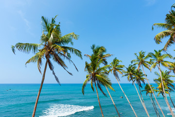 Palm trees and tropical ocean
