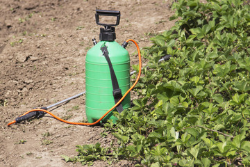Spraying Fertilizer. Hand-pumped sprayer. Using pesticides on the garden. Spraying of strawberry bushes during flowering to the formation of berries of the ovary