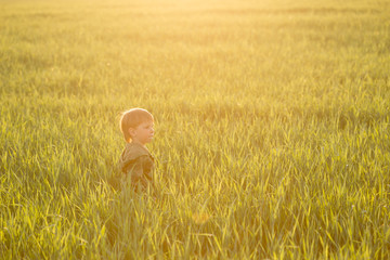 Child in the meadow in the tall grass at sunset.