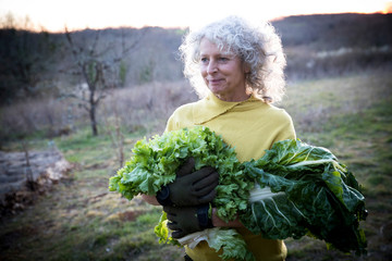 Mature woman carrying armful of cabbage and salad leaves in field