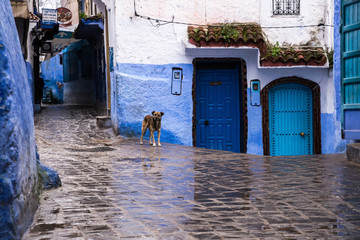 A dog stands on a small square in a blue city in the rain