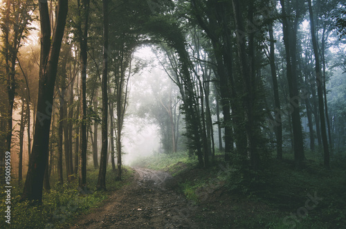fantasy forest background with road in fog stock photo and royalty