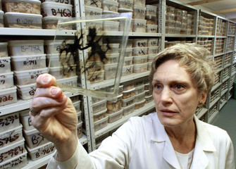RESEARCHER LOOKS AT HUMAN BRAIN IN WORLDS LARGEST BRAIN BANK.