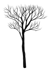 Tree vector on white background.Tree vector by hand drawing.