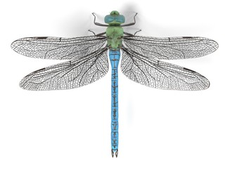 realistic 3d render of emperor dragonfly