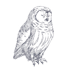 Owl sketch. Vector hand drawn illustration of cute bird isolated on white.