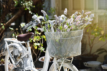 Vintage white bicycle with bouquet of flowers in basket, Lazy sunshine day.