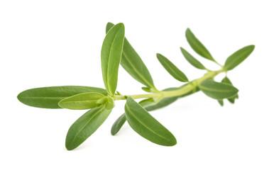 Fresh hyssop (Hyssopus officinalis)
