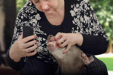 Owner shoots dogs teeth for televeterinary