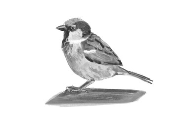Illustration of a Sparrow. Digital painting.