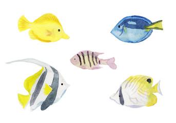 熱帯魚 水彩イラスト