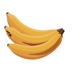 banana fruit tropical food image vector illustration