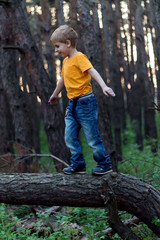 the boy on the tree