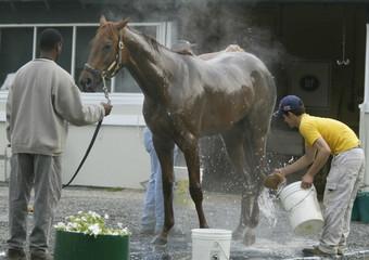 RACE HORSE FUNNY CIDE WASHED AT BELMONT.