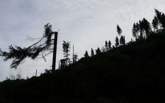 Fallen trees in a forest are silhouetted on the brow of a hill near the western town of Werdohl