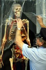 A security guard unpacks a plastinated human specimen at Gunther von Hagen's exhibition Koerperwelte..