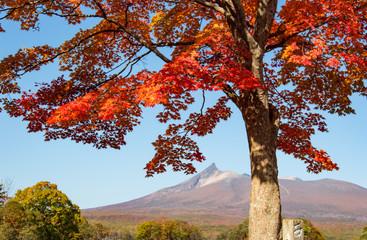 Colorful autumn leaves in idyllic Onuma Quasi National Park, Hokkaido, Japan