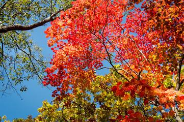 Colorful Autumn Leaves, Japan, Hokkaido, Onuma Quasi National Park
