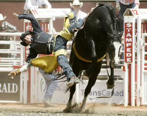 Cowboy is bucked off horse during rodeo at the Calgary Stampede
