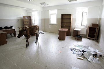 A cow walks into one of the cluttered barracks evacuated by the Russian army at the Senaki Military Base