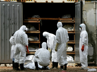 Medical staff inspect a body at a make-shift morgue where bodies of victims of the tsunami are being..