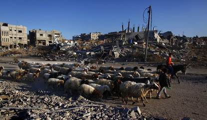 Palestinian boys lead a flock of sheep past destroyed buildings at sunrise in Jabalya in the northern Gaza Strip
