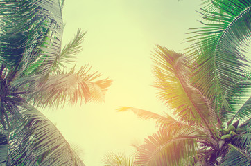 Palm trees against blue sky Palm tree at tropical coast vintage toned and stylized coconut tree