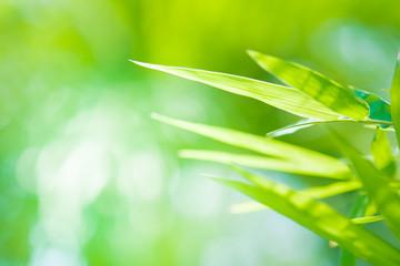 Green leaves, fresh in moring backgroud concept