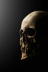 Human skull on a black background. flare effect