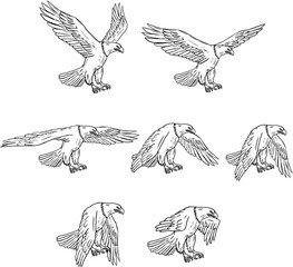 Bald Eagle Flying Drawing Collection Set