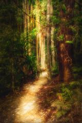 Path Through the Rainforest in Mount Tamborine Botanical Gardens