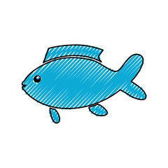 Fish sea animal icon vector illustration graphic design