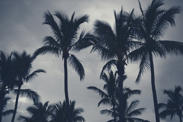 Palm trees silhouettes on the beach on a cloudy day.