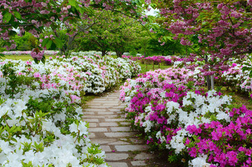 Peaceful stone walking path in a garden of spring azalea flowers and plum blossoms