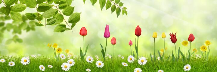 Frühling 440