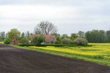Haus im Rapsfeld am Oderbruch