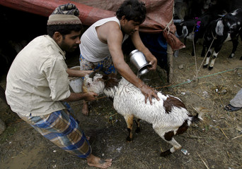 Men wash a goat for sale for Eid al-Adha at a livestock bazaar in the old quarters of Delhi