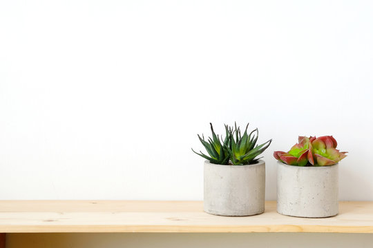 Succulent plants on wood table over white cement wall background, template with copy space