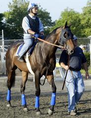 RACE HORSE EMPIRE MAKER AT BELMONT PARK.