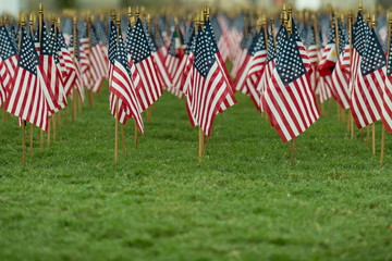 Rows of American flags on a green grass background with a shallow depth of field